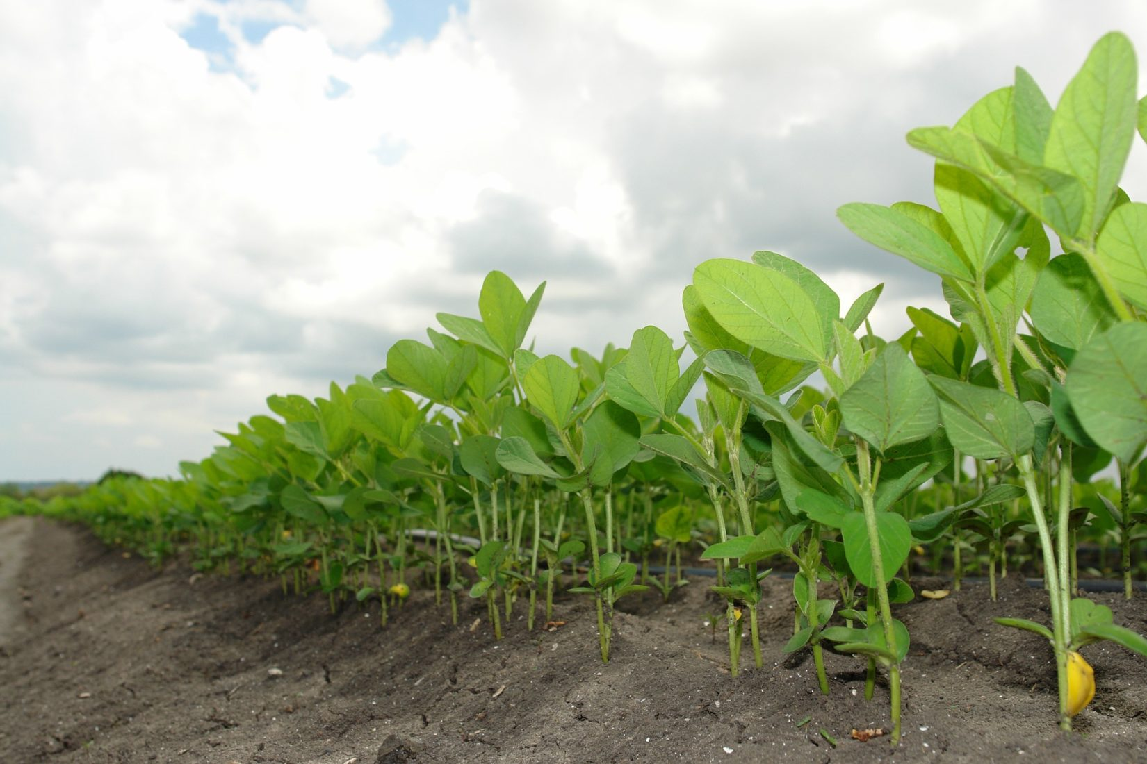 Trade War Disruption Threatens Already Vulnerable Soybean Producers & Supply Chain