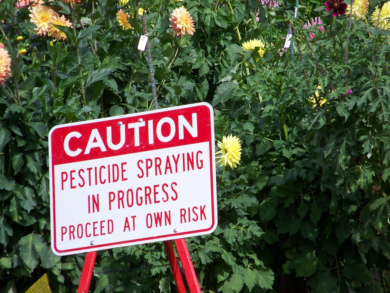 Synthetic Pesticide Bans to Boost Demand for Biopesticides and Organic Products