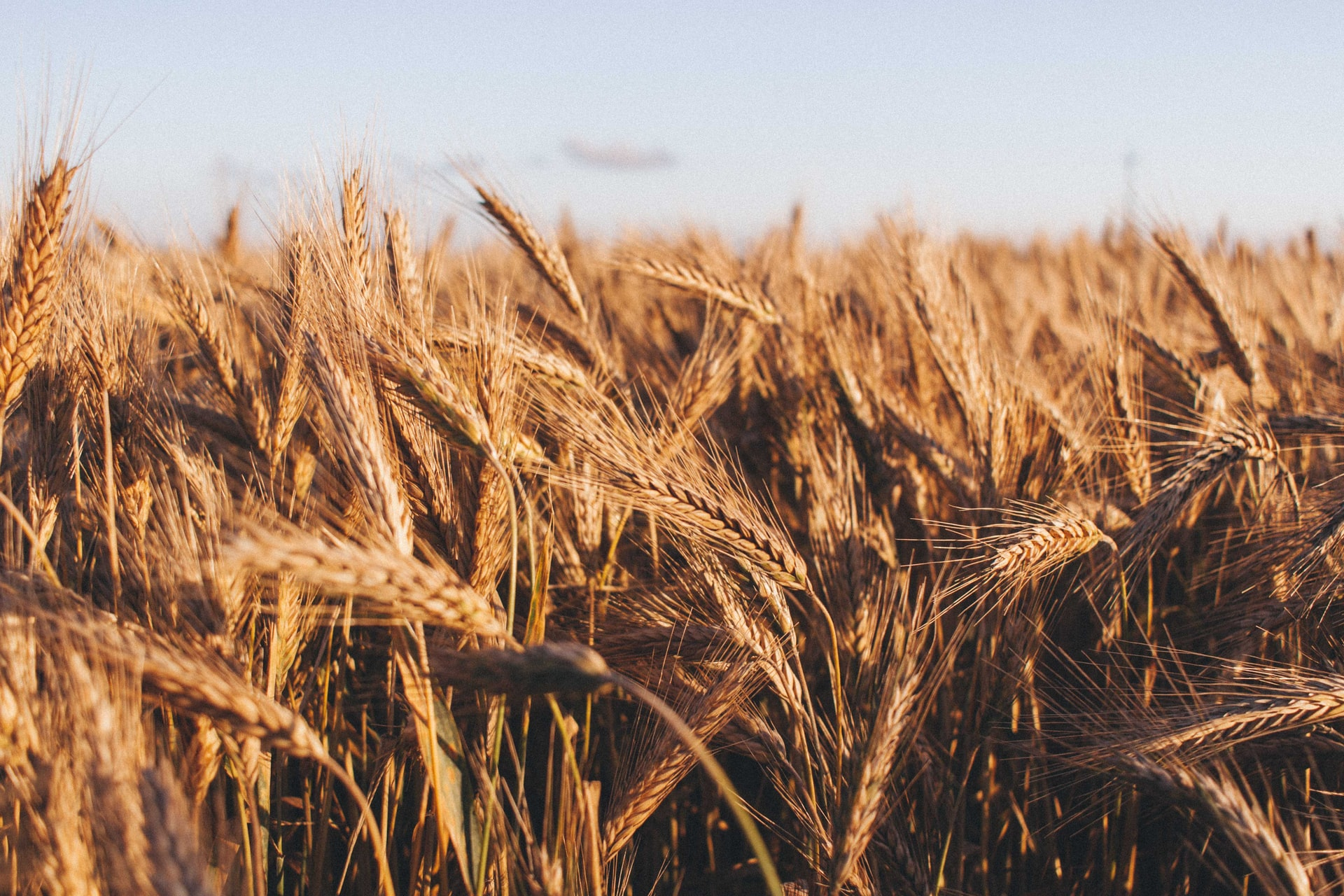 Crop Stocks Running Thin as Several Supply-Side Disruptions Push Up Commodity Prices