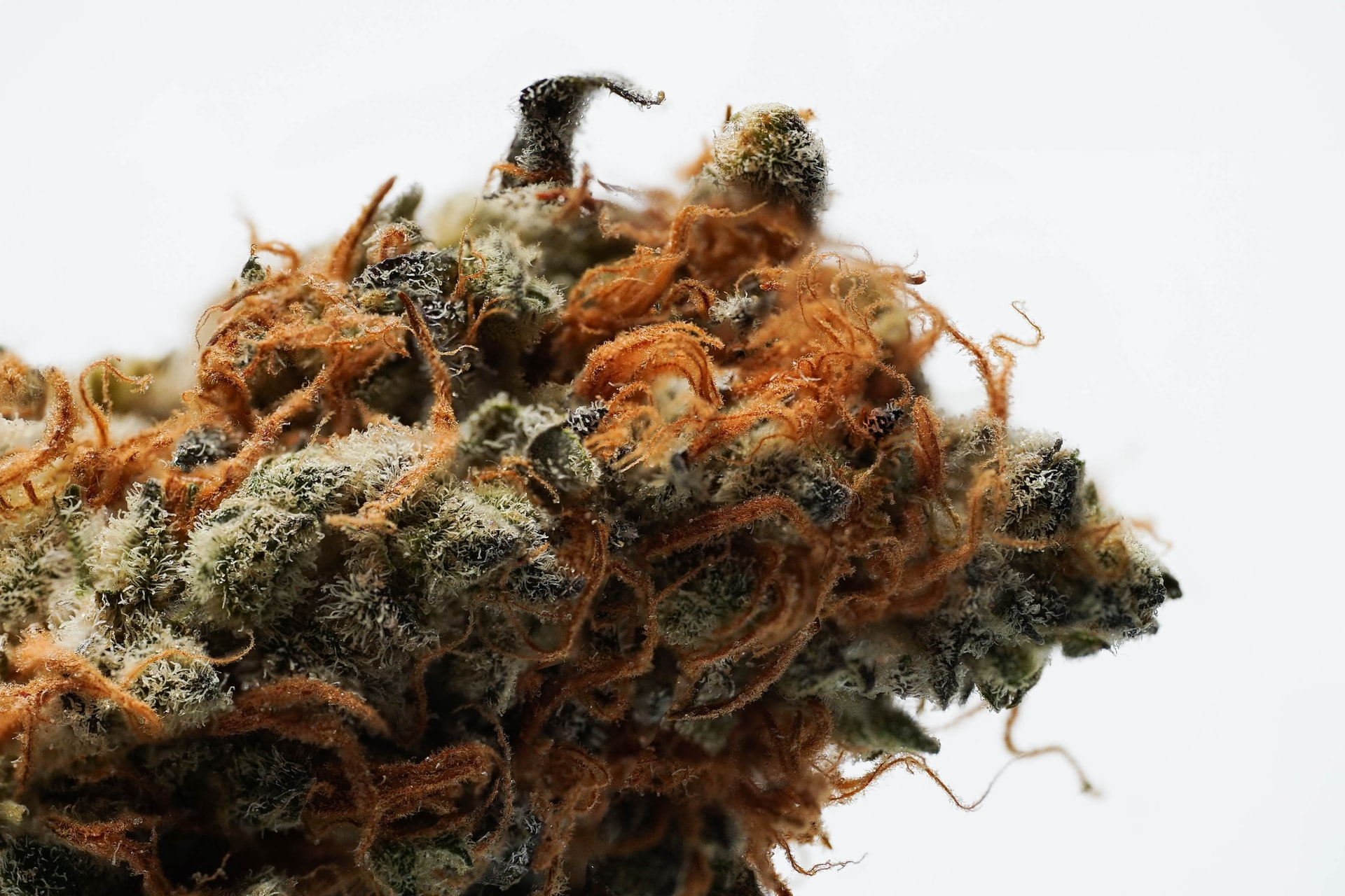 Cannabis Earnings Impress, Slow Pace of Regulatory Reform Could Accelerate in Months Ahead